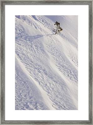 Lone Tree On Mount Hood In Winter Mount Framed Print by Craig Tuttle