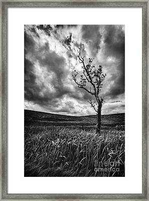 Lone Tree On The Ayrshire Moors Framed Print by John Farnan