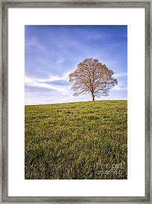 Lone Tree On The Hill Colour Framed Print by John Farnan
