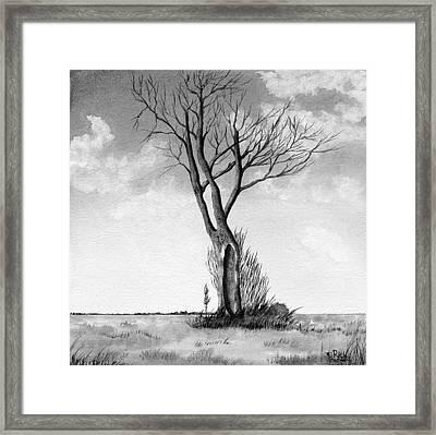Lone Tree On The Prairie Framed Print