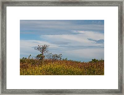 Framed Print featuring the photograph Lone Tree On The Rhode Island Coast by Nancy De Flon