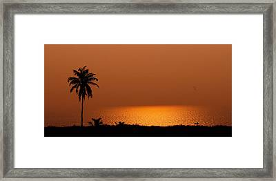 Lone Tree Silhouette During Sunset Framed Print by Hegde Photos