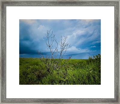 Lone Tree Framed Print by VJ Musick