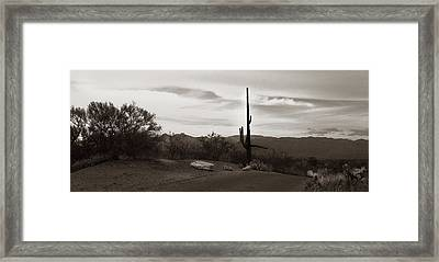 Lonely Cactus Framed Print