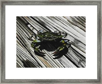 Lonely Crab Framed Print by Kim Selig