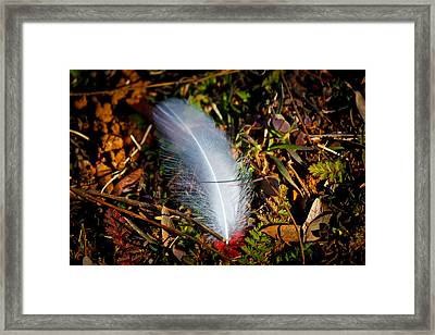Lonely Feather Framed Print by Doug Long
