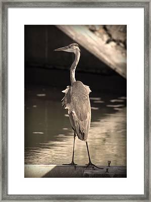 Lonely Flamingo Bird Framed Print by Radoslav Nedelchev