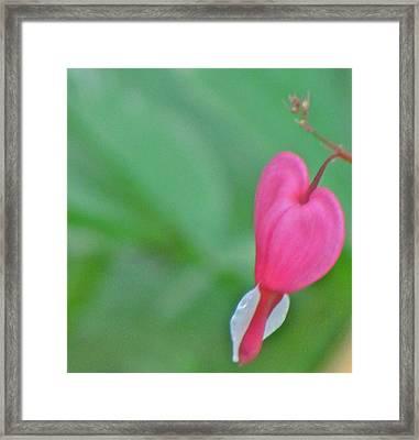 Lonely Heart Framed Print by Debra Broad-Carmichael