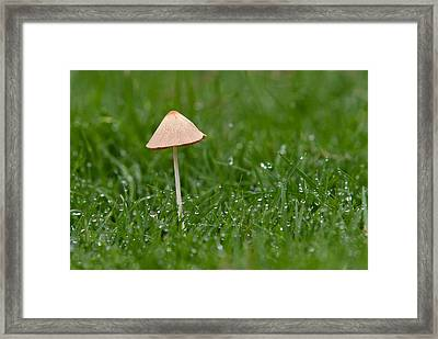 Lonely Mushroom Framed Print by Miguel Capelo