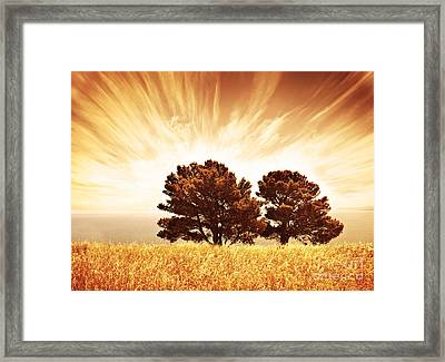 Lonely Old Trees Framed Print by Anna Om