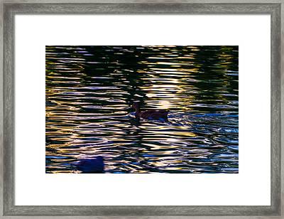 Lonely Swim Framed Print by Joshua Dwyer