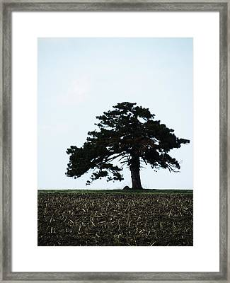 Lonely Tree #1 Framed Print by Todd Sherlock