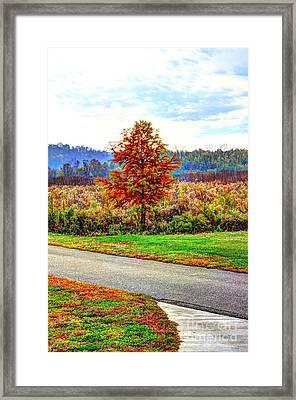Lonely Tree 2 In Otto Armleder Park Framed Print