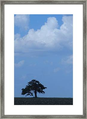 Lonely Tree #2 Framed Print by Todd Sherlock