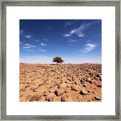 Lonely Tree At Sahara Desert Framed Print