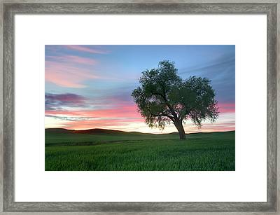 Lonely Tree At Sunset In Palouse Wheat Fields Framed Print