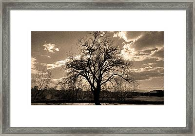 Lonely Tree At Sunset Framed Print by Sergio Aguayo