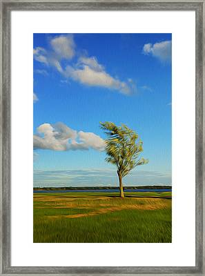 Lonely Tree. Framed Print