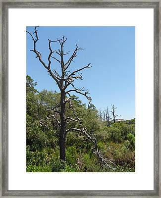 Lonely Tree Framed Print by Craig Keller