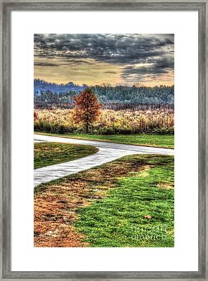 Lonely Tree In Otto Armleder Park Framed Print
