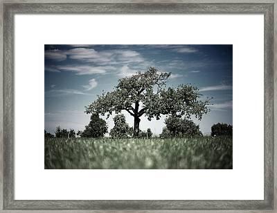 Lonely Tree Framed Print by Markus Wäger