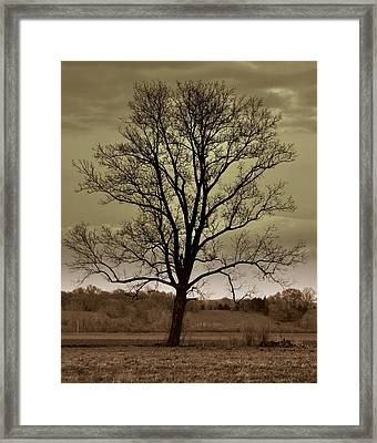 Lonely Tree Framed Print by Marty Koch