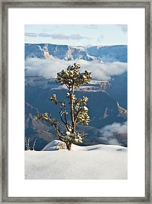 Lonely Tree Over The Grand Canyon Framed Print