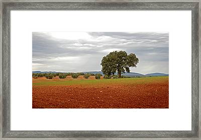 Lonely Tree Framed Print by Perry Van Munster
