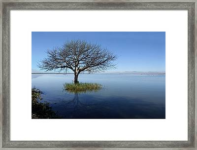Lonely Tree Framed Print by Saul Landell / Mex