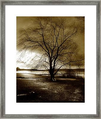 Lonely Willow Framed Print