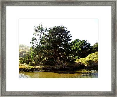 Lonelytree  Framed Print by The Kepharts