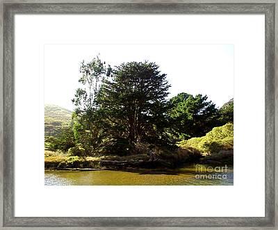 Lonelytree  Framed Print