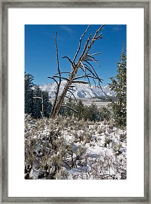Lonesome Pine Framed Print by Jay Seeley