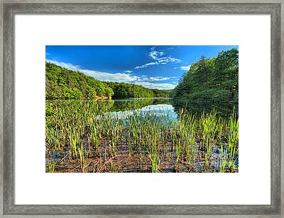 Long Branch Lake Marsh Framed Print by Adam Jewell
