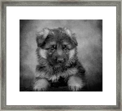 Long Coated Puppy II Framed Print by Sandy Keeton