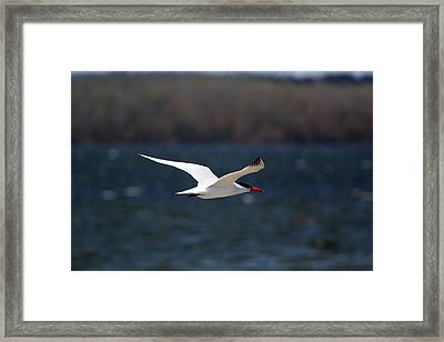 Long Haul Flight Framed Print by Ramabhadran Thirupattur