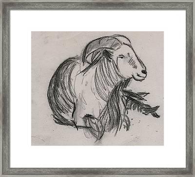 Long Horn Mountain Goat Framed Print by Ethel Vrana