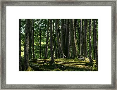 Long Shadows Framed Print by Mike Flynn