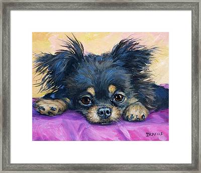 Longhaired Chihuahua Puppy Black And Tan Framed Print