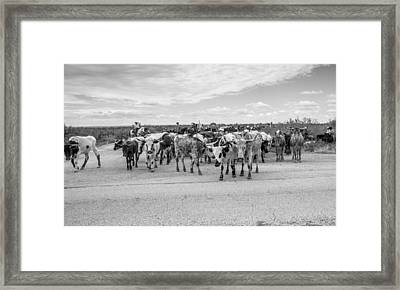 Longhorn Cattle Drive 3 Framed Print