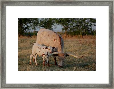 Longhorn Cow And Calf Framed Print by Paul Louis Mosley