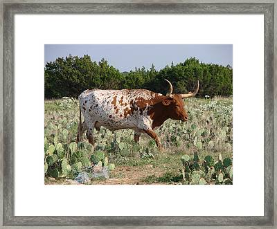 Framed Print featuring the photograph Longhorn In Cactus by Linda Cox
