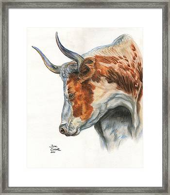 Longhorn Framed Print by Jana Goode