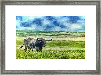 Longhorn Prarie Framed Print by Jeff Kolker
