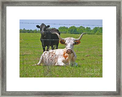 Framed Print featuring the photograph Longhorn Resting by Val Miller