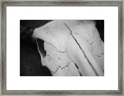 Longhorn Skull Framed Print by Julie VanDore