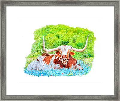 Longhorns In Bluebonnets Framed Print