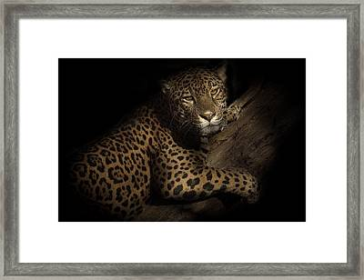 Framed Print featuring the photograph Longing by Cheri McEachin
