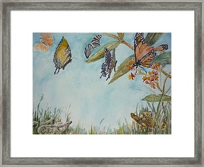 Look A Turtle Framed Print by Dorothy Herron