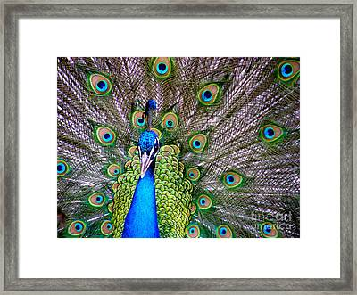 Look At Me Framed Print by Jo